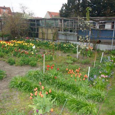 Gartenanlage Ühre